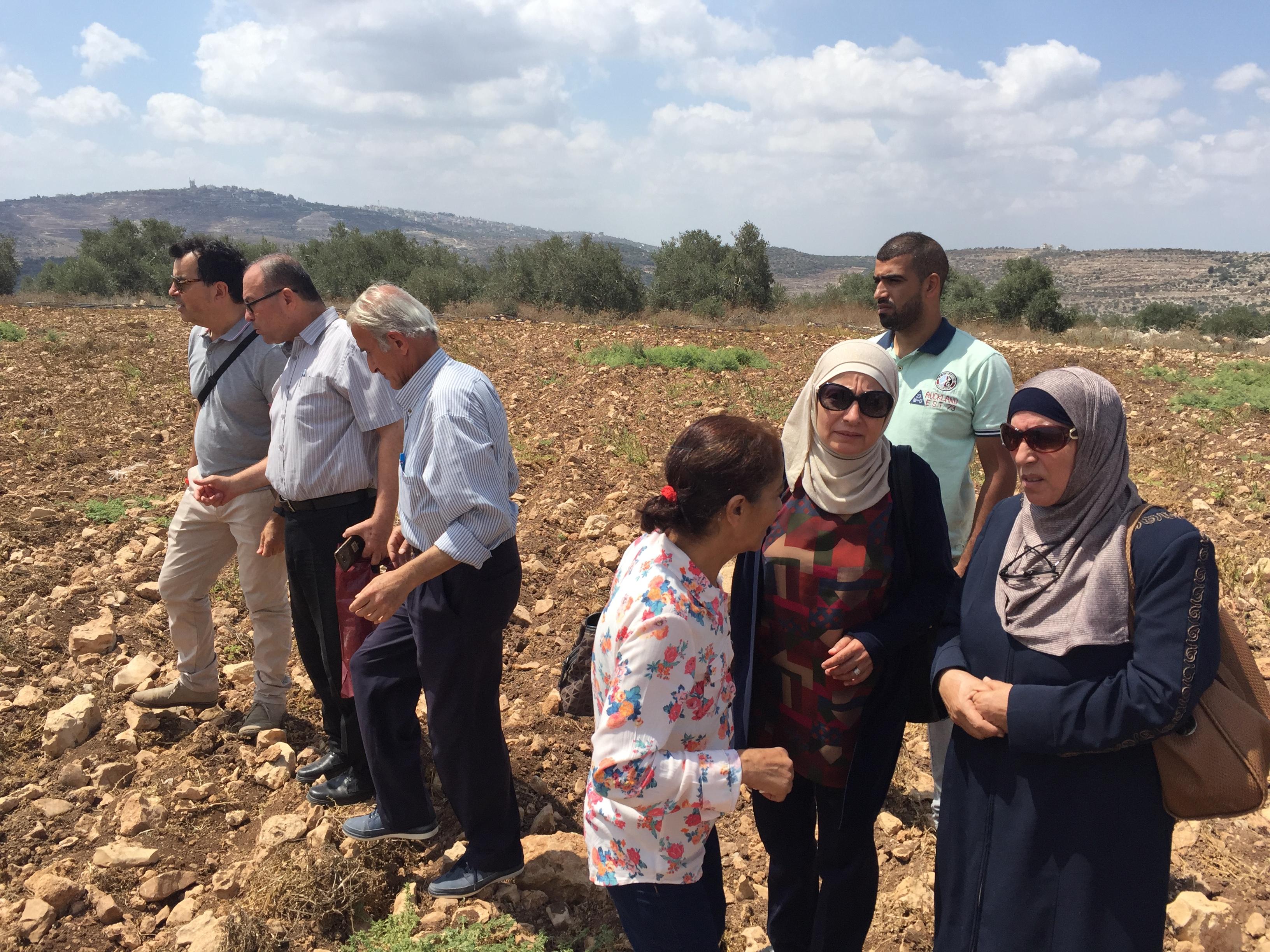 Le nuove coltivazioni di piante aromatiche a Jenin