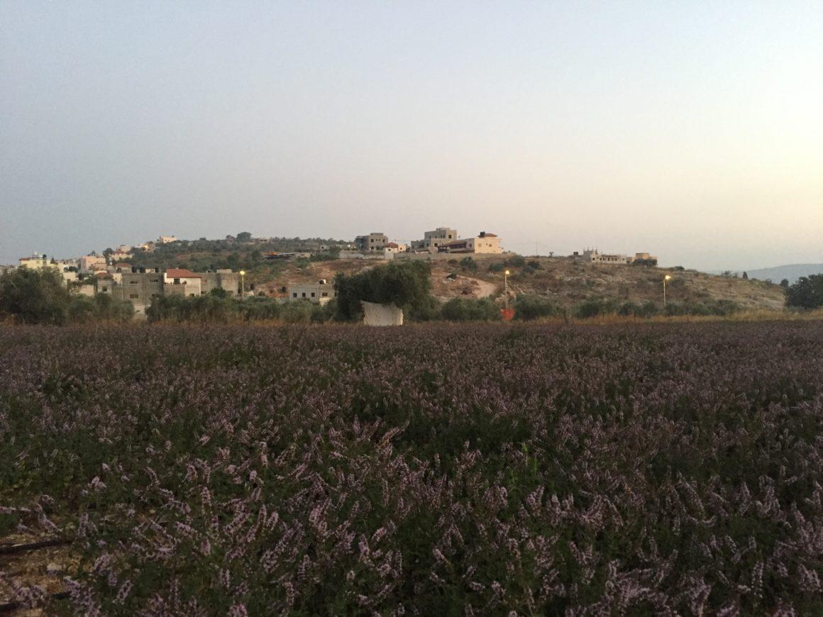 Dal campo agli alambicchi: distillando erbe aromatiche