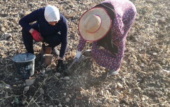 Nuove coltivazioni, nuovi saponi